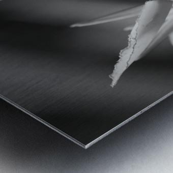 Claw Metal print
