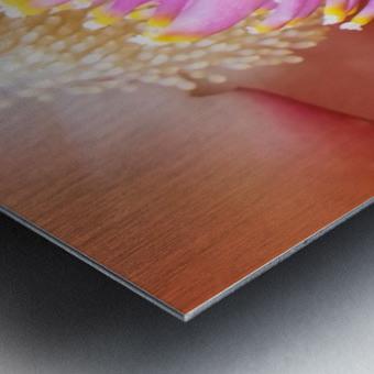 Delicate  Metal print