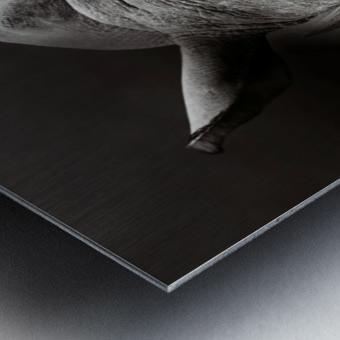 Rhinoceros portrait Metal print