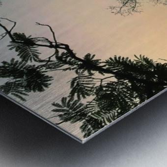 Solo Metal print