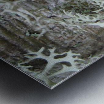 Bark With Lichen 02 Metal print