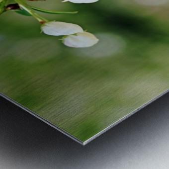 Crabapple Blossoms Metal print