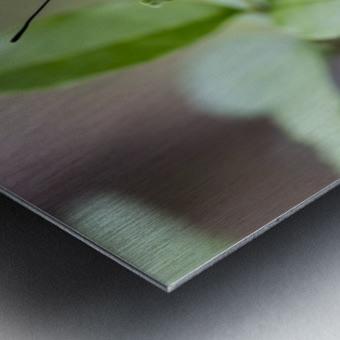 Leopard lacewing  Metal print