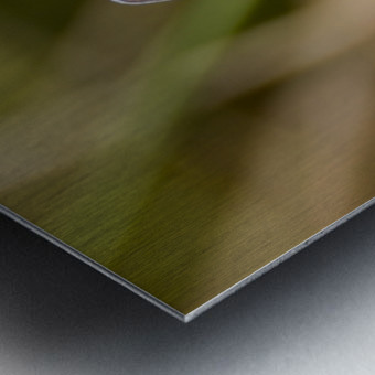 Coupling of common blue Metal print