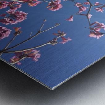 Anime cherry blossom xx Metal print