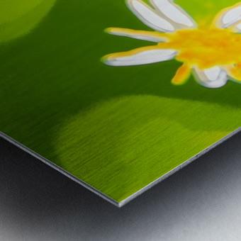 My Daisies - Mes Marguerites Metal print