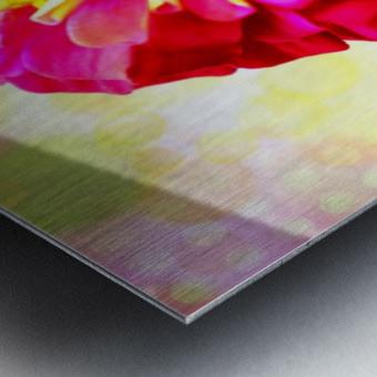 Rainbow daisy Metal print