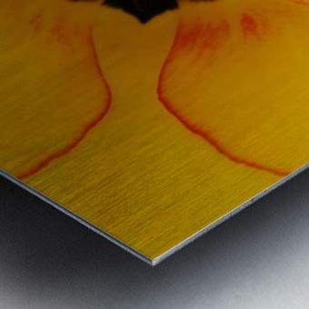 DSC00675 Metal print
