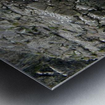 Seals Metal print