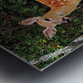FawnBySaltBlock3 Impression metal