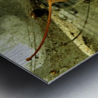 D (1) Metal print