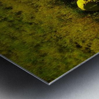 sofn-23FF155D Metal print