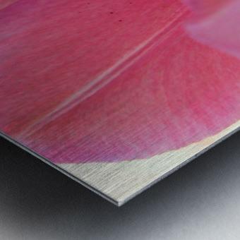 Beautiful Pink Tulip Photograph Metal print