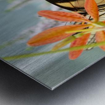 Butterfly On An Orange Flower Photograph Metal print