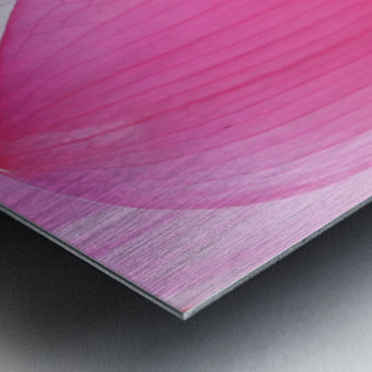 Lily Macro Metal print