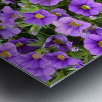 Beautiful Purple Flowers Photograph Metal print