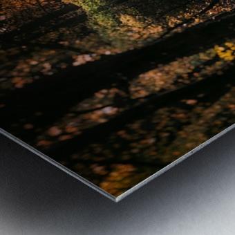 Forest 2_OSG Metal print