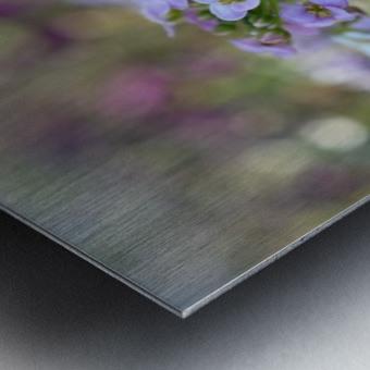 Small Purple Flowers Photograph Metal print