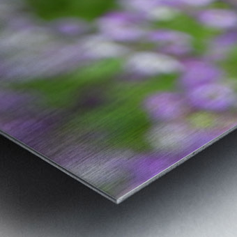 Beautiful Small Purple Flowers Photograph Metal print