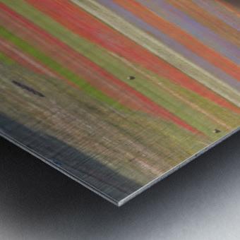 La fioritura di Castelluccio Metal print