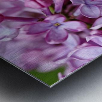 Fragrance Of Spring Metal print