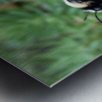 Black Bumble Bee Metal print