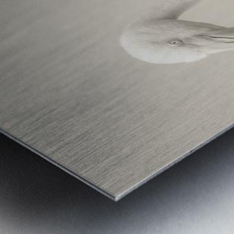 Fluffy Metal print