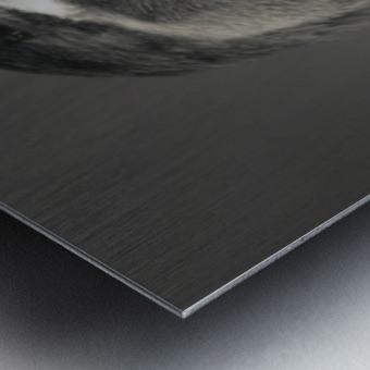 Wood Duck Metal print