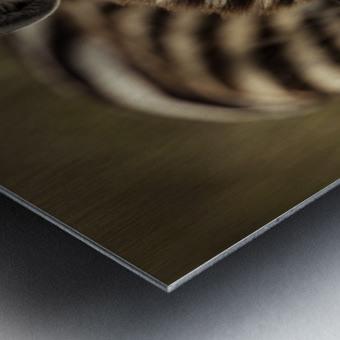 Between the Lines - Color by www.jadupontphoto.com Metal print