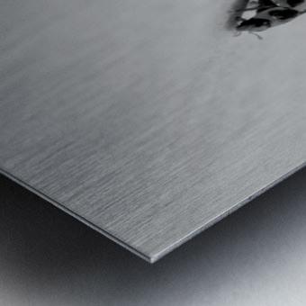 Nature 017 Metal print
