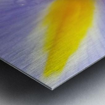 Inner Iris Metal print