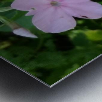 Small Purple Flowers Metal print