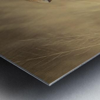 164A1810 Metal print