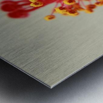 Hibiscus detail Metal print