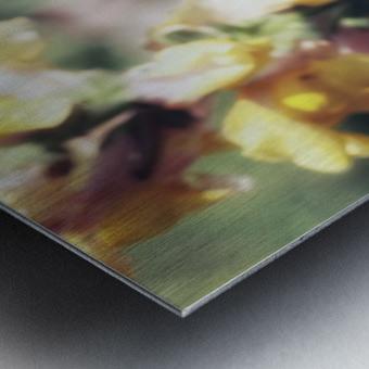 Lupinus Luteus Yellow Metal print
