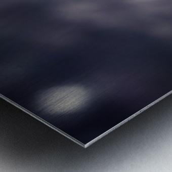 Lupinus luteus Dark Blue Metal print