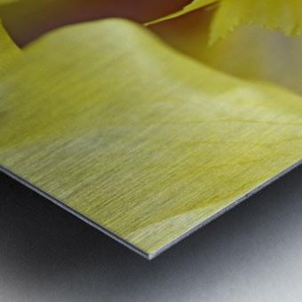 Lavender And Yellow Iris Heart Metal print