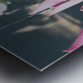 Pink Lotus Collage Metal print