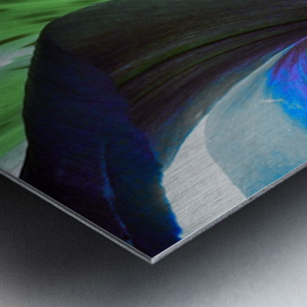 Vibrant Iris Metal print