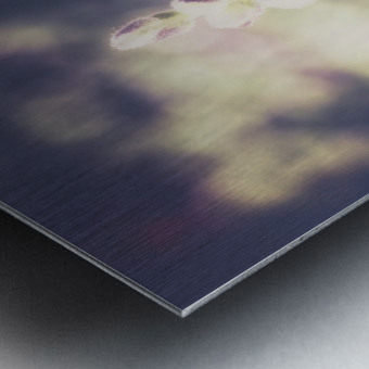 Lupine Fuchsia Metal print