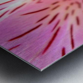 Gentle Pink Metal print