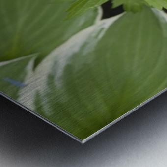 Wood Anenome Metal print