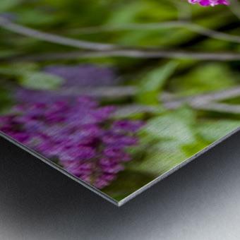 Purple Lilac Blossoms 2 Metal print