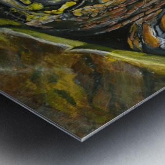 Box Turtle Metal print