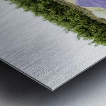 Lavender plants and fruit trees 6 Metal print