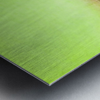 896D69E1 58A6 47B8 BA17 A1F90A7132FB Metal print