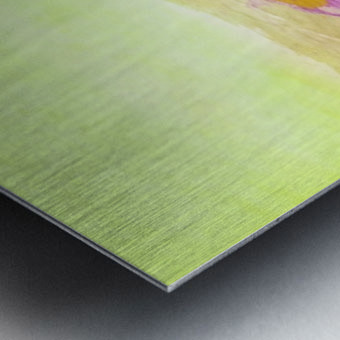 78109C58 DA0A 4B60 81EB 3CEDBC313EC1 Metal print