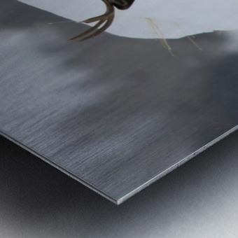 mule Metal print