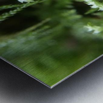 IMG_3563 Metal print