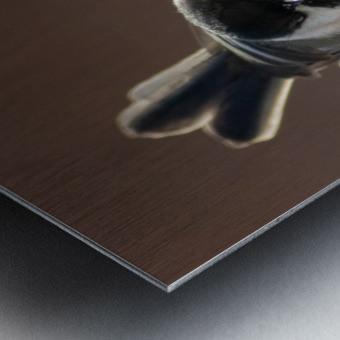 Black capped Chickadee Metal print
